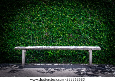 Lonely wooden bench in the park and ivy wall