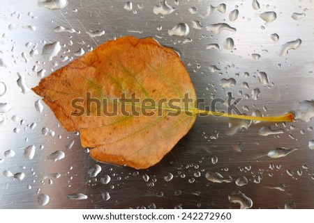 Lonely yellow autumn leaf on a steel sheet covered with the rain drops - stock photo