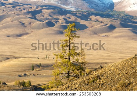 Lonely yellow larch, autumn in Altai Mountains, Siberia, Russia - stock photo