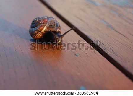 lonesome snail - stock photo