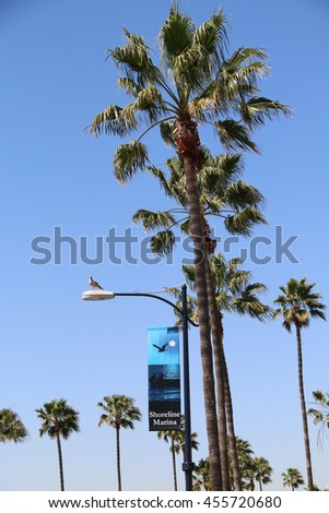 Long Beach, California, USA - March 16, 2016: The Long Beach Shoreline Marina, now part of the Shoreline Yacht Club, was built in 1983 to host the competitions in sailing at the 1984 Summer Olympics.