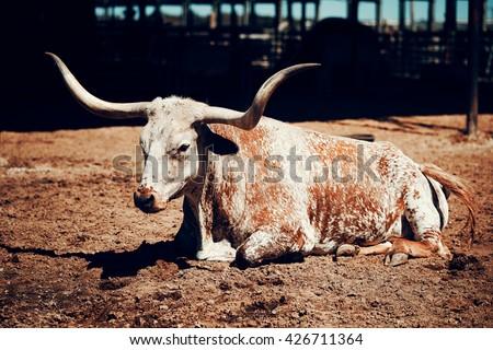 Long buffalo horn, Texas, USA - stock photo