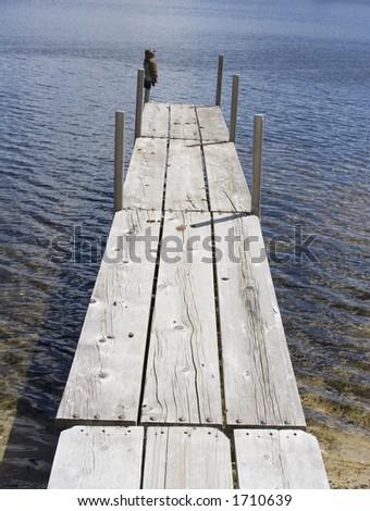 Dog Dock Diving Long Island