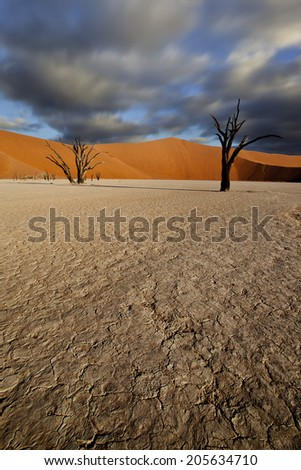 long exposure image of desert with dead trees and moving clouds - stock photo