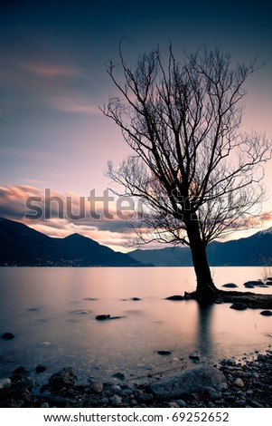 long exposure of lake scenery with tree - stock photo
