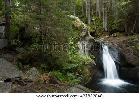 Long exposure of small waterfall over dark  mossy rocks amid pine tree trunks and lush foliage in Black Forest