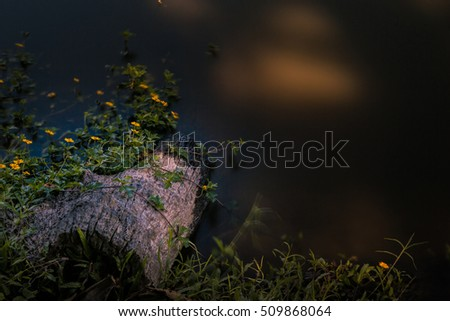 Long exposure of Timber and yellow flower in lake at countryside