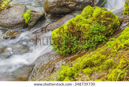 long exposure shot of moss on the rock in waterfall day time for background. - stock photo