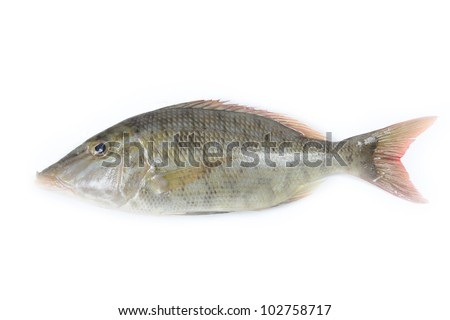 Long-face emperor fish on white background