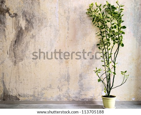 Long flower in vintage interior of dirty a stone wall - stock photo