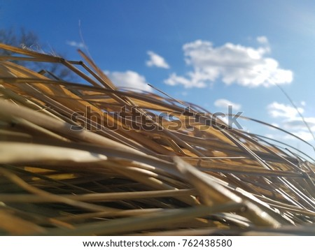 long grass and sky
