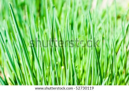 long grass meadow closeup - stock photo
