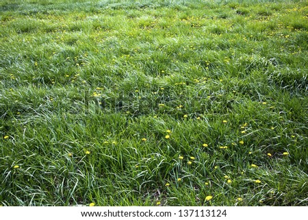long grass meadow with yellow flowers - stock photo