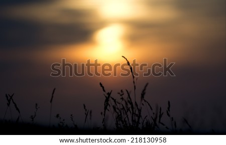 Long grass with a colorful sunset in the background - stock photo
