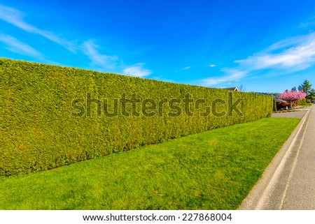 Long green cedar fence on the empty street. - stock photo