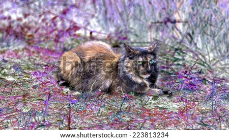 Long hair cat with one blue and one green eye is have a rest on a meadow with pink colored plants - stock photo