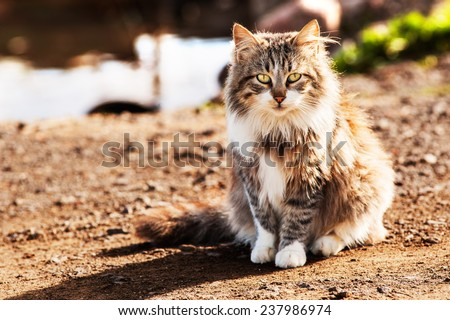 Long haired wild cat sitting  - stock photo