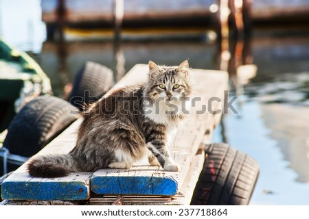 Long-haired wild cat sitting on a jetty - stock photo