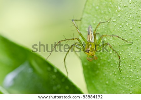 long legs spider in green nature or in forest or in garden