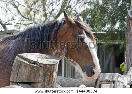 Long-maned horse in stable - stock photo