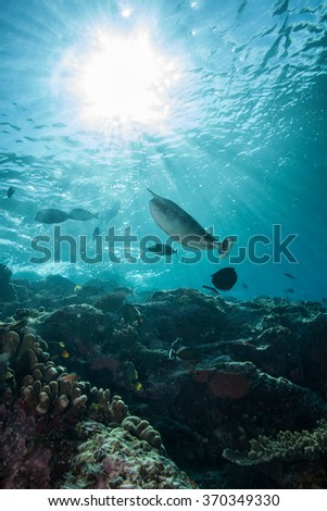 Long Nosed Unicorn Fish Swimming Above the Reef with a Sunburst Overhead - stock photo