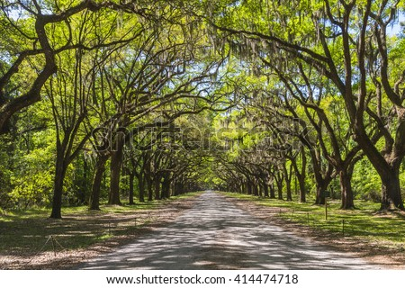 Long road lined with ancient live oak trees draped in spanish moss at historic Wormsloe Plantation in Savannah, Georgia, USA - stock photo