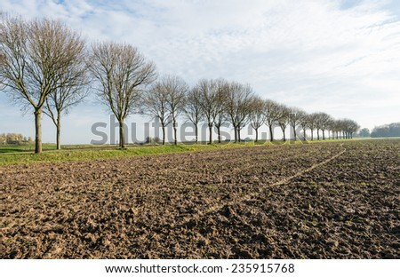 Long row of bare trees beside a country road and a ploughed field of clay ground in a Dutch polder landscape in the fall season. - stock photo