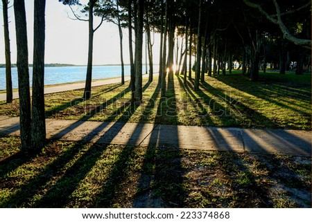 Long shadows through trees by the water at sunset. - stock photo