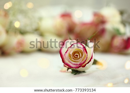 Long stem white and red roses and baby's breath with fairy light bokeh in the background. Shallow depth of field with selective focus on flower in foreground.
