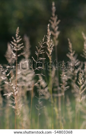 Long stems of uncut grass with pollen - stock photo