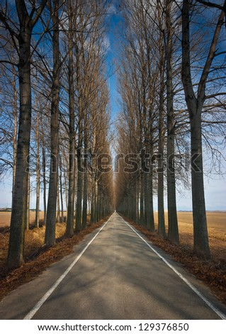 Long straight road lined by high trees in winter near Torviscosa, Friuli, Italy