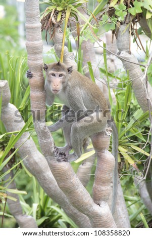 long tail monkey on a tree
