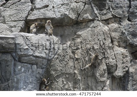 Long tailed macaque,monkeys climbing and sit on a rock mountain
