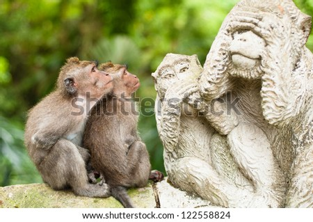 Long-tailed macaques (Macaca fascicularis) in Sacred Monkey Forest, Ubud, Indonesia - stock photo