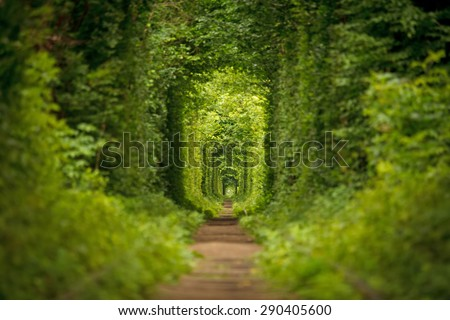 long tunnel of love in ukraine - stock photo