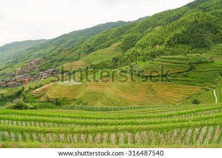 Longsheng rice terraces guilin china landscape at summer - stock photo