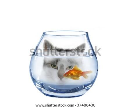 look at on swimming in aquarium fish cat - stock photo