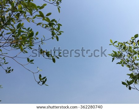 Look at the sky through the leaves of the tree,daytime - stock photo