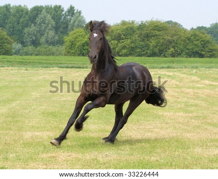 Look at this Frisian horse....