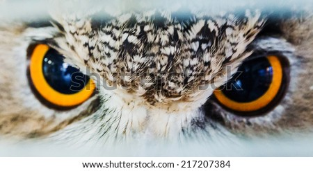 look owl eagle very close up detail face - stock photo