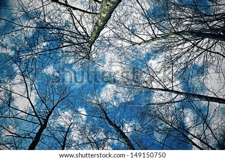 look up among the trees on blue sky - stock photo