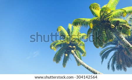 Look up at coconut palms against blue sky at daytime - stock photo