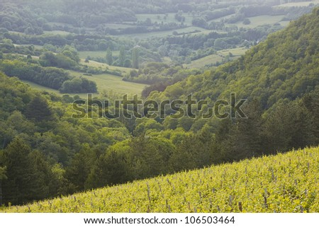 Looking across the vineyards and countryside of Burgundy, France. - stock photo