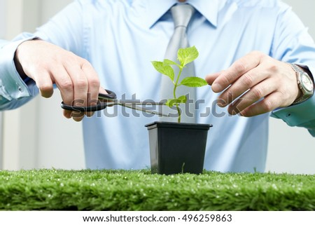 Looking after a plant
