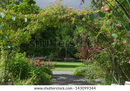 Looking at a rose garden through a rose-covered archway lit by sun. - stock photo