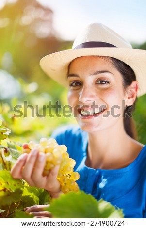 Looking at camera cheerful young woman harvesting the grapes in the vineyards by a sunny day - stock photo