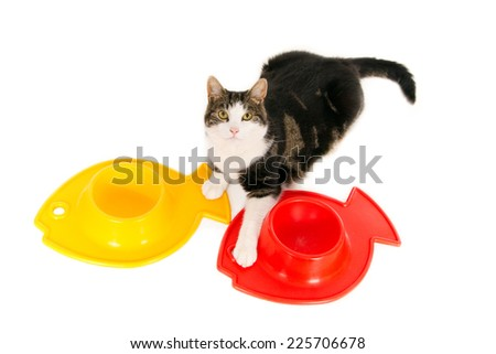 Looking cat with a yellow and red empty food bowl in a fish form, isolated on white  - stock photo