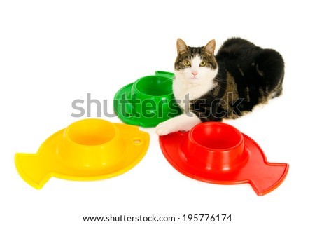 Looking cat with three colorful empty food bowls in fish form, isolated on white - stock photo
