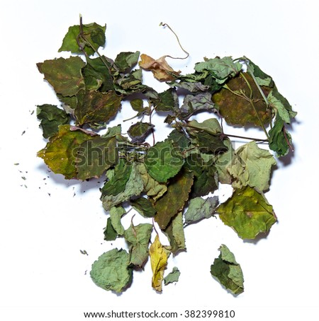 Looking down on pile of dried patchouli leaves, branches over white, not isolated. - stock photo