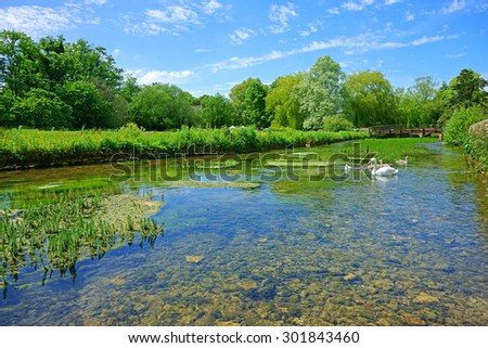 Looking down stream on the River Coln with a Swan, Cygnets and a stone bridge in the distance in the Cotswold village of Bibury, in summer time, Gloucestershire, England, United Kingdom - stock photo